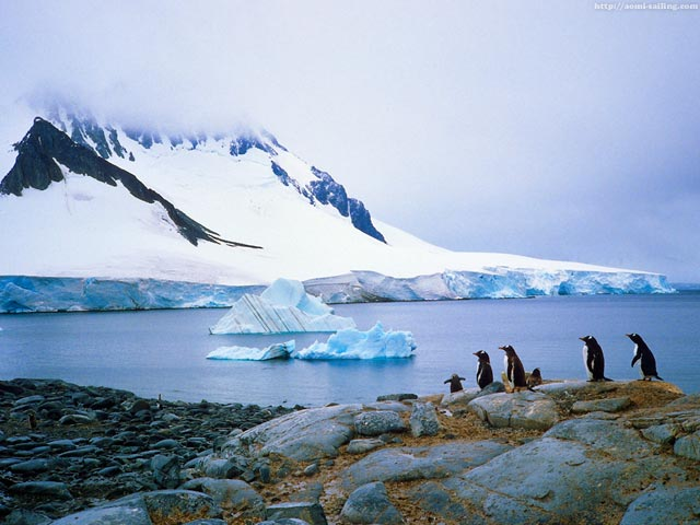Penguins in Dorian bay, Antarctic